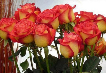 Bouquet of Beauties - bouquet, flowers, beauty, nature, roses