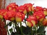 Bouquet of Beauties