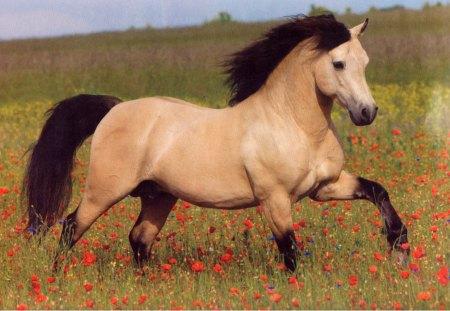 buckskin horse horses animals background wallpapers on desktop