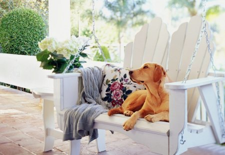 Relaxing - labrador, bench, adorable, sweet, cute, photography, porch, swing, summer, flowers, dog