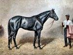 Iron Ruler - Horse 1