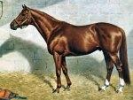Majestic Prince - Horse f2