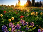 Spring flowers at sunrise