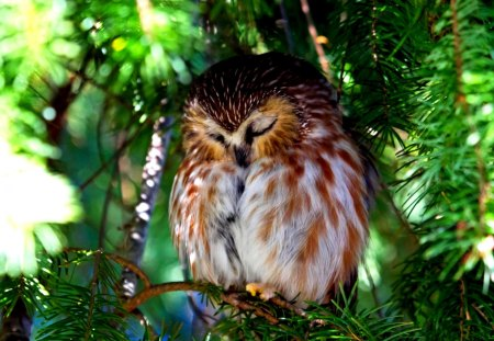 DAY DREAMER - rest, owl, tree, nature