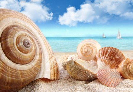 ~Sea Shell~ - beach, nature, shell, sea shell