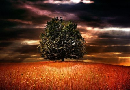 ~Landscape of the Tree~ - landscape, nature, sky, tree