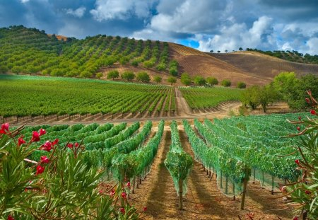 Beautiful Rows Of Young Fruit Trees Fields Nature