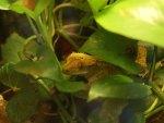 Lizard In Hiding