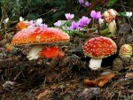 Fly Agaric and Flowers