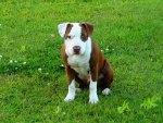zeno puppy 2