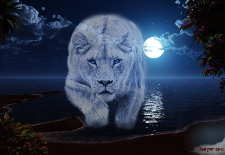 Blue Lion Cove Cats Animals Background Wallpapers On Desktop