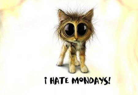 TW I Hate Mondays - funny saying, entertainment