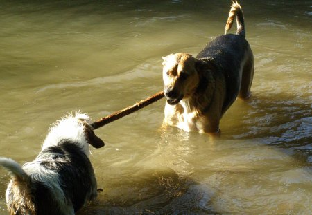 Turbo & Chloe - turbo, river, chloe, stick