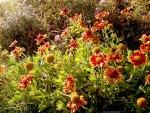 Flowers under sunlight