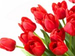 Wallpaper with tulips 4