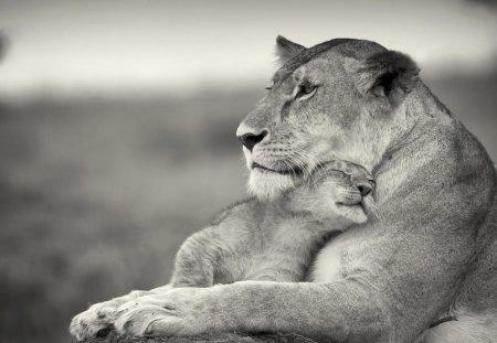 True love - lioness, adorable, lion, mother, cub, cute, love