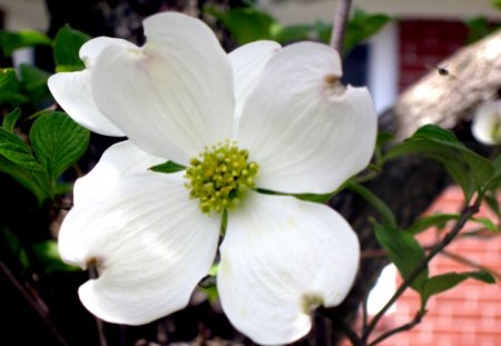 Dogwood and Friend - springtime, spring, beautiful day, dogwood, inflight, white flower, flower, insect, white