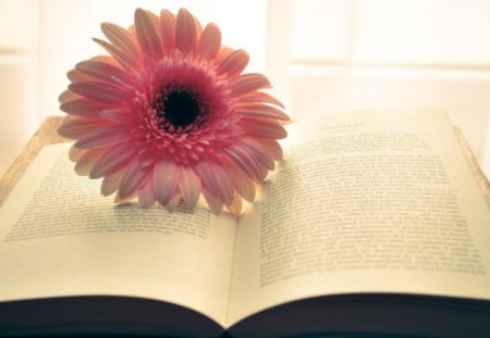 Flower Book - book, flower, soft, pink