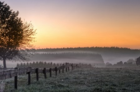 sunrise on fields in the countryside - fences, fields, sunrise, trees, fog