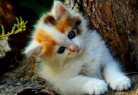 Cute kitten on a tree cats animals background - Cute kitten wallpaper free download ...