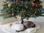 Two cats sleeping under the tree