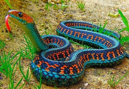 Colorful Snake - nature, reptiles, animals, snake