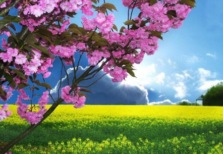 Spring is Here - sun, flowers, nature, trees, clouds, sky, field
