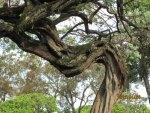 Tree bending
