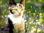 A calico cat sitting among flowers