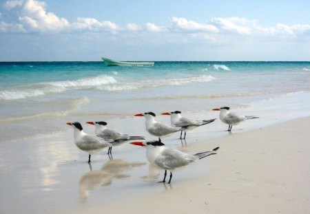 Birds on the beach - beach, water, strand, bird, birds