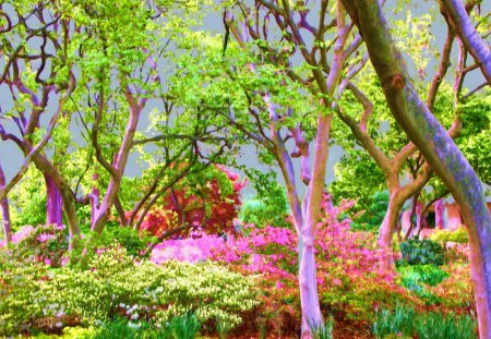 The Beauty Of Nature - Trees, Flowers, Springs, Paintings, Nature