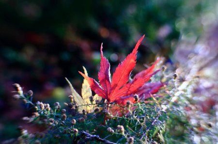 The Last Colors - leaf, color, grass, colors, nature