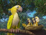 Yellow parrot family