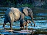 mama elephant & baby elephant