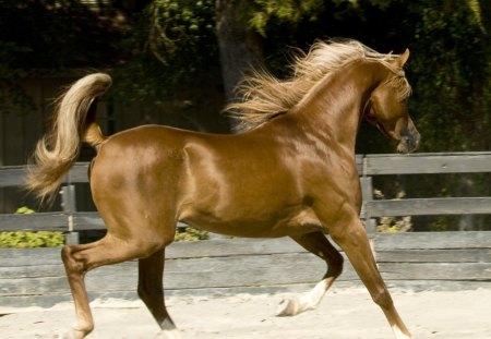 Gold Horse 2