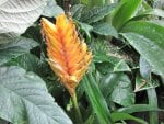 Colorful Garden 40