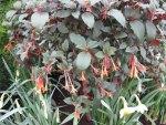 Botanical Garden year around 21