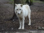 My Visit at the Wolfpark