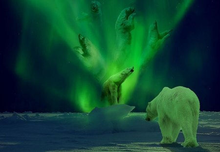 Polar Bear Aurora - art, fantasy, wallpaper, digital, aurora borealis, beautiful, photoshop, polar bear