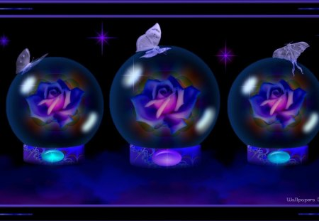 Purple Roses Under Glass 1920x1080 - GlassGlobes, Globes, Butterflies, Rose, Roses, Flowers, PurpleRoses, Butterfly