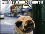 Worried Pug