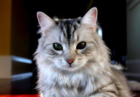 GREEN EYE KITTY - catm, green, fluffy, eyes