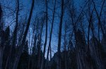 moon over leafless forest
