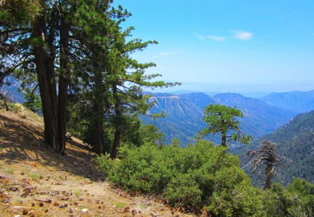 Pine Trees facing a distant Canyon. - colorful, inspiring, beautiful, silent