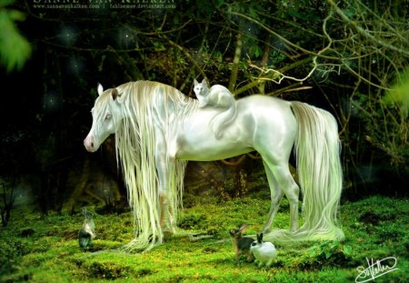 White Horse - cool, cat, simply, white horse