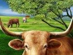 Longhorn cows