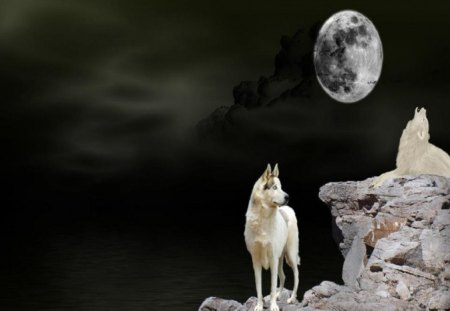 Night Vision - moon, 3D and CG, wolves, abstract, animals