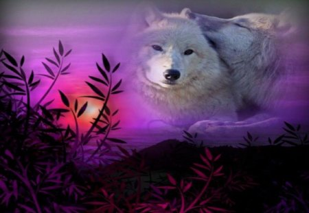 Purple Mountain Majesty - fantasy, trees, wolves, abstract, animals, dogs