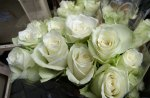 White roses for sale