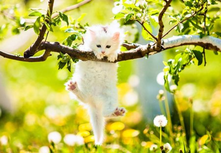 Cute Kitty - pretty, grass, kitty, adorable, spring, cat, cat face, sweet, tree, paws, green, kitten, cats, animals